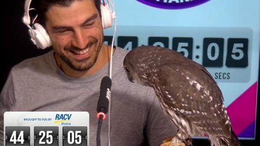A Barking Owl Drops By For Jase & PJ's 56 Hour Marathon