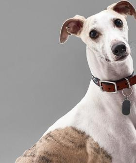 Country Road Now Has a Luxury Pet Range!
