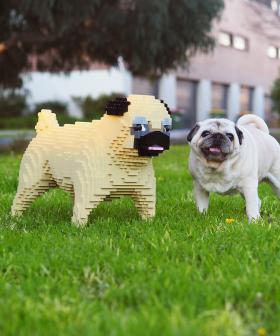 You Could Own a Custom-Made Lego Version of Your Dog!