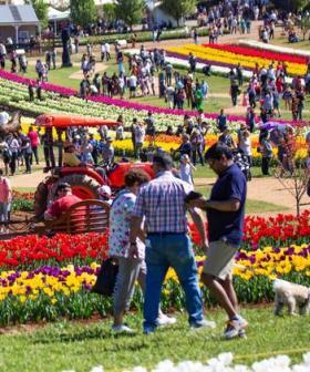 Victoria's Tulip Festival Is Back!