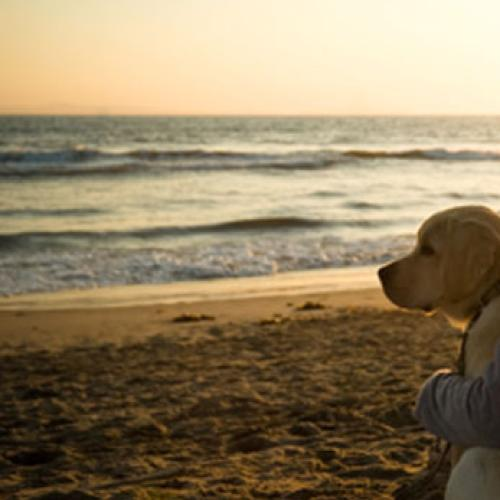 A Stress-free Holiday With Your Dog