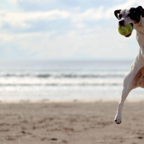 The Top Seven Beaches For Dogs In Melbourne