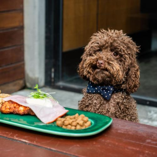 A Pub In Melbourne Is Dishing Up $5 Parmas For Your Dogs!