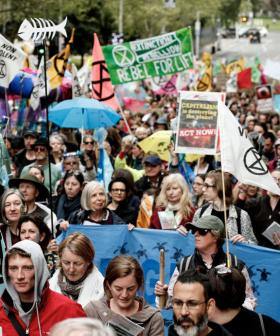 Most Disruptive Climate Protests Yet Set To Occur During Melbourne's Peak Hour
