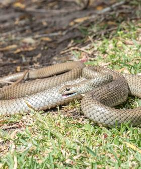 There's A Snake Warning For Melbourne As The Weather Starts To Heat Up