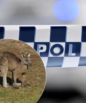 Police Appeal After Up To 20 Kangaroos Killed In A Terrible Act Of Animal Cruelty