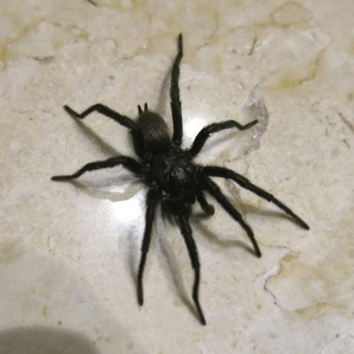 Melburnians Urged To Check Their Backyards After A Terrifying Spider Outbreak