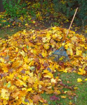 "Man Arrested For ""Trying To Have Sex With A Pile Of Leaves"""