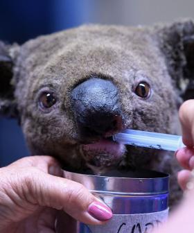 How You Can Help The Wildlife Affected By The NSW Bushfires