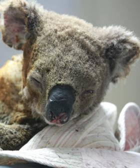 NSW Animal Rescue Charity WIRES Now Able To Help Save Victorian Wildlife