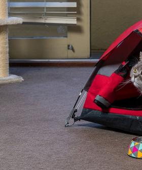 You Can Now Buy Camping Tents For Your Cat Because Of Course You Can