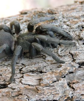 There Is Now A Deadly Funnel-Web Spider Outbreak & I'm Never Leaving The House Again