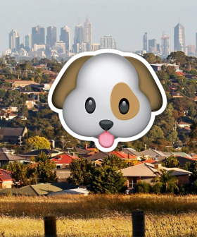 Renting In Melbourne? From Monday You Can Have A Pet But As Always, There Is A Catch