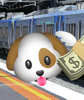You Can Cop Massive Fines For Travelling With Your Dog On Public Transport