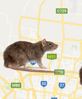 Three Areas Of Melbourne Are Experiencing RAT INFESTATIONS In Their Homes!