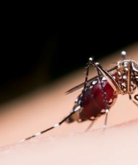 Doctors Release Warning As Mosquito-Borne Virus Cases Increase
