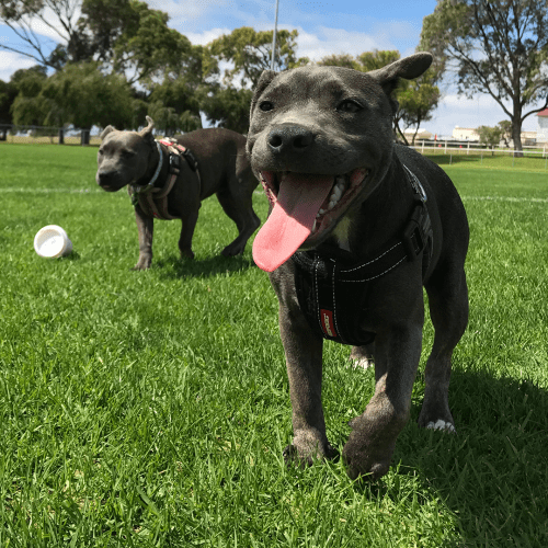 These Melbourne Suburbs Are Getting Brand New Dog Parks With Heaps of Fun Features