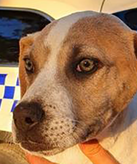 Puppies Dumped Near Primary School In Melbourne's South East