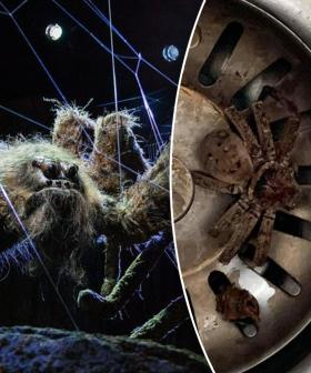Sydney Dad Discovers Terrifying 'Harry Potter-Like' Spider In His Sink