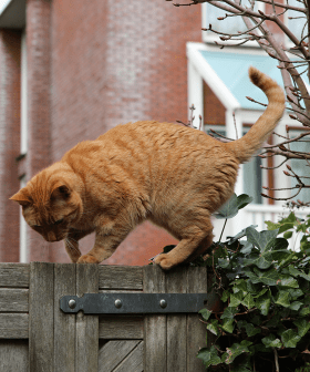 Melbourne Residents Could Be Fined If Their Cat Is Caught Outside Their Property