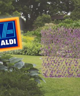 Aldi Is Selling A PURPLE Garden Trellis So Now Green Just WON'T Do!
